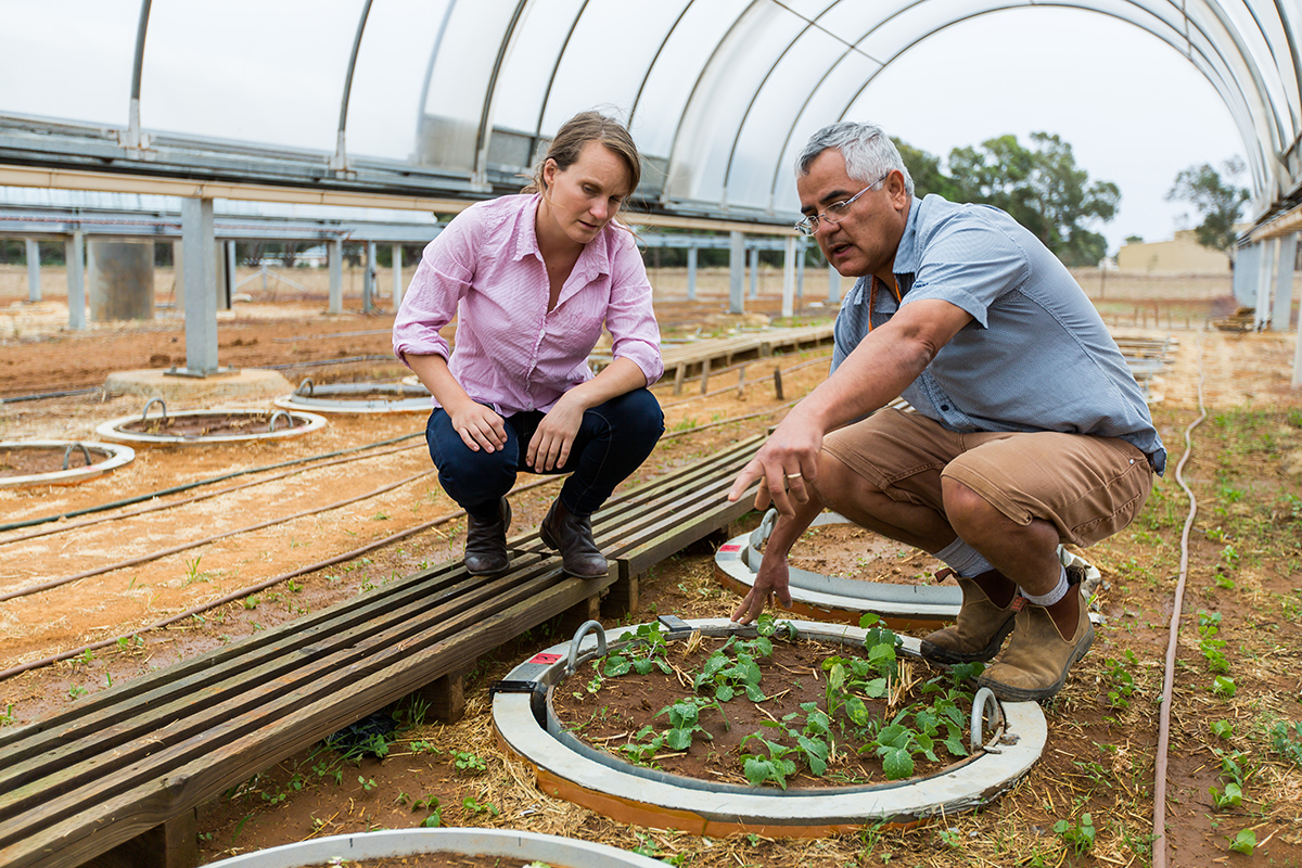 Two workers under an open greenhouse in a rural area with small plots of plants growing, agriculture, agtech, research, education